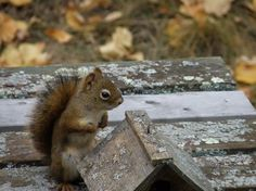 Squirrels move very fast. This photo would not have been possible had the squirrel not decided to stop and pose. National Geographic Photos, Your Shot, Squirrels, Picnic Table, Amazing Photography, Poses, Nature, Animals, Chipmunks