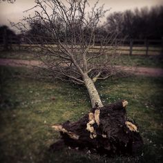 Waaa! Look what happened! #treedown #stormdoris #stormdoris