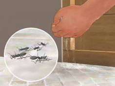 Passos    Preste atenção nas escoteiras. Os primeiros sinais de formigas em sua cozinha são um aviso para você. Estas são as escoteiras conferindo se sua cozinha está apta para ser