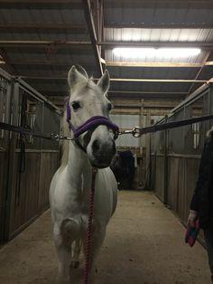 """""""Hello""""the white pony said"""