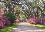 nothing like a peaceful winding road to take me to the places in need to go