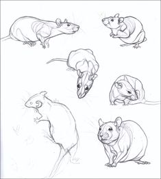 Sketchbook 3 by nikkiburr on deviantart animal sketches, animal drawings, a Pencil Drawings Of Animals, Animal Sketches, Drawing Sketches, Art Drawings, Drawing Ideas, Draw Animals, Character Art, Character Design, Cute Rats