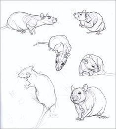 Sketchbook 3 by nikkiburr on deviantart animal sketches, animal drawings, a Pencil Drawings Of Animals, Animal Sketches, Drawing Sketches, Art Drawings, Drawing Ideas, Draw Animals, Tattoo Sketches, Cute Rats, Art Studies