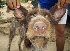 These are photos of the winners of the various contest for The Ugliest Dog in the World. Competition is tough because there are some really ugly (but funny) dogs Funny Animal Images, Funny Animals With Captions, Funny Dog Pictures, Cute Funny Animals, Ugly Dogs, Big Dogs, Dogs And Puppies, Doggies, Ugly Animals