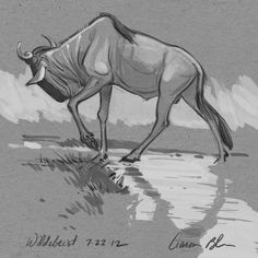 Wildebest Study Sketch  by Aaron Blaise Represented by Travis Foster