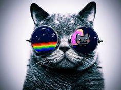 Фото Кот в очках с отражением игры Nyan Cat - Lost in Space