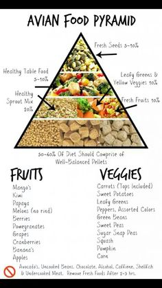 Pet Bird Food Pyramid