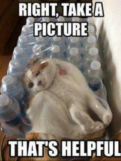 Desmund the bottle cat... How did I get here???