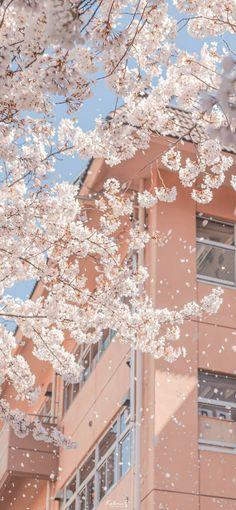 Cute Pastel Wallpaper, Soft Wallpaper, Anime Scenery Wallpaper, Iphone Background Wallpaper, Aesthetic Pastel Wallpaper, Kawaii Wallpaper, Aesthetic Backgrounds, Aesthetic Wallpapers, Shotting Photo