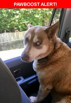 Is this your lost pet? Found in Winston-Salem, NC 27106. Please spread the word so we can find the owner!  Super Sweet - Big Guy - One Blue, One Brown eye  Near Norman Rd & Sally Kirk Rd NW
