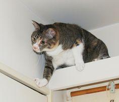 「我が家の猫」 すげー、狙ってる。