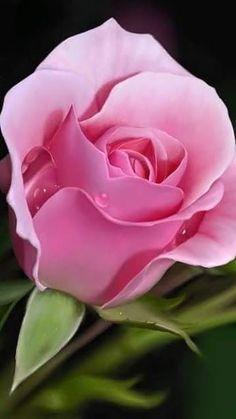 ✿⊱╮Natural elements: Pink rose.