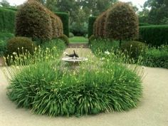 The Australian native hedges in background show how well natives can work in a formal garden, mixed with exotics in foreground.