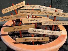 Depois plantar seus temperos, em vasinhos ou diretamente no solo, selecionados onze maneiras criativas de identificá-las usando os mais variados materiais. Aproveite nossas sugestões e não se confunda mais com os nomes das ervinhas.