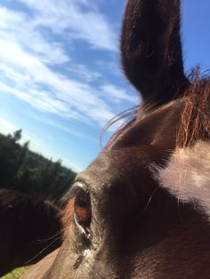 Cute Horses, Horse Love, Horse Girl, Dreamy Photography, Horse Photography, Cavalo Wallpaper, Animals And Pets, Cute Animals, Most Beautiful Horses