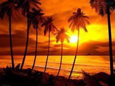 Resultado de imagem para paisagens lindas por do sol