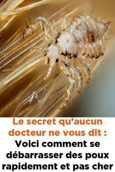 Le secret qu'aucun docteur ne vous dit : Voici comment se débarrasser des poux rapidement et pas cher !