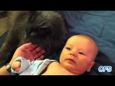Funny Cats and Babies Compilation
