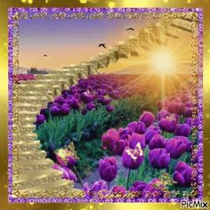 The perfect Photo Frame Purple Animated GIF for your conversation. Discover and Share the best GIFs on Tenor. Flowers Gif, Glitter Flowers, Purple Flowers, Beautiful Gif, Beautiful Sunrise, Beautiful Flowers, Beautiful Scenery, Gif Pictures, Images Gif