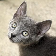 Cap'n Crunchis a goofy little kitten who is available for adoption at our Mission campus!