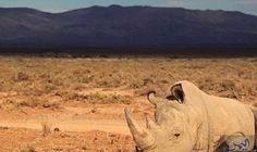 وحيد قرن يقتحم بيتًا ويقتل طفلة في…: ذكرت الشرطة المحلية في نيبال، أن حيواناً نادراً من نوع وحيد القرن، تسبب في مقتل طفلة تبلغ من العمر…