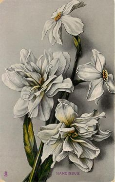 """""""Narcissus"""" ~ 1910 postcard from 'The Time of Flowers', series1"""