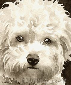 BICHON FRISE Sepia Art Print Signed by Watercolor Artist DJ Rogers dog funny dog funny funny aesthetic funny hilarious funny sleeping