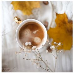 #autumnvibes #autumncolors #fall #falldecor #photooftheday #lifestylephotographer Coffee Photography, Fall Decor, My Photos, Blog, Photo And Video, Instagram, Autumn Decorations, Blogging
