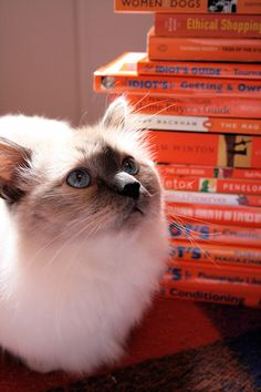Stirling the Cat and a Stack of Orange Books Orange Book, What Cat, Red Books, Kittens, Cats, Catching Fire, Stirling, Snuggles, Creativity
