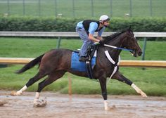 Rachel Alexandra- Rachel Alexandra (foaled January 29, 2006 in Kentucky) is a retired American Thoroughbred racehorse and the 2009 Horse of the Year. When she won the 2009 Preakness Stakes, the second leg of the Triple Crown, she became the first filly to win the race in 85 years (the last filly to win was Nellie Morse, in 1924).