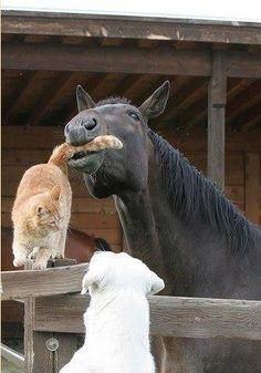 I Love Everything In This Picture #horse#cat#dot#pets#country#barn#cowgirl
