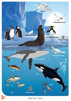 Polar Animals, Easy Animals, Animals For Kids, Cute Animals, Pencil Drawings Of Animals, Bird Drawings, Ocean Food Web, Environment Painting, Morse