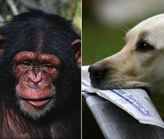 If we had to guess, we'd say that chimpanzees — our closest animal relative — would best understand a human gesture like pointing. But researchers have discovered that this just isn't true. Instead, it's our dogs who really get us — and get what we're pointing at.