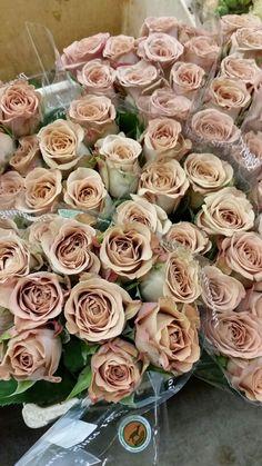 Cappucino Roses