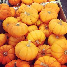 Fall favorite: #minipumpkins! #farmersmarketnyc via rawyogichef on Instagram