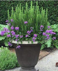 ΚΗΠΟΥΡΙΚΗ: 7 Μυστικά και 50+ ΙΔΕΕΣ για ΣΥΝΔΥΑΣΜΟΥΣ φυτών σε ΓΛΑΣΤΡΕΣ-ΖΑΡΝΤΙΝΙΕΡΕΣ | ΣΟΥΛΟΥΠΩΣΕ ΤΟ