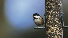 Image result for the birds