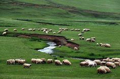 Ordu Yaylaları Hayran Bıraktı  Yayla içinde bulunan gölet ve menderesleri ile Türkiye'nin en güzel yaylalarından biri olan Perşembe Yaylası, güzelliğiyle doğa sevenleri kendine hayran bıraktı.