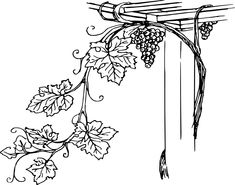 grapes growing regions in india . grapes growing r Grape Drawing, Vine Drawing, Grape Vine Trellis, Grape Vines, Vine Tattoos, Leaf Tattoos, Vinyl Wall Art, Wall Decal Sticker, Grapevine Growing