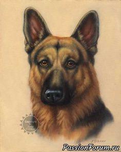 Картинки к году собаки - запись пользователя Banny (Татьяна) в сообществе Картинки для творчества в категории Животные и птицы