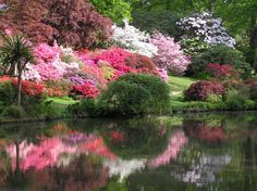 Exbury Gardens in Southampton, Hampshire. Exbury is a forest garden of 80 acres, including rhododendrons, azaleas and camellias. Beautiful views over the Beaulieu River.