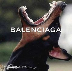 Find images and videos about aesthetic, dog and Balenciaga on We Heart It - the app to get lost in what you love. Boujee Aesthetic, Bad Girl Aesthetic, Aesthetic Collage, Aesthetic Photo, Aesthetic Pictures, Photo Wall Collage, Picture Wall, Aesthetic Iphone Wallpaper, Aesthetic Wallpapers