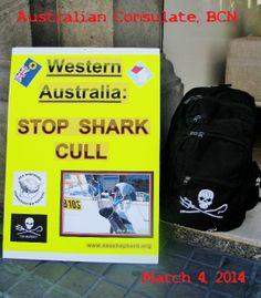 WESTERN AUSTRALIA: Stop Shark Cull.    #SeaShepherd #defendconserveprotect #nosharkcull #NoWASharkCull