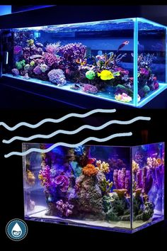 Have you ever wondered if your favorite celebrity owned a fish tank and what kind of fish they have in it? I sure have. This is why I've created this pretty awesome list of celebrities who own some fantastic fish tanks. Aquarium Design, Fish Tanks, Aquariums, Pretty Cool, Your Favorite, Celebrity, Design Ideas, Create, Awesome