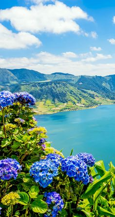 Amazing Lake of Sete Cidades with hortensia's, Azores, Portugal    |   32…