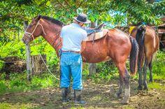 Cowboy preparing the horses at Rancho Tropical Matapalo, Osa Peninsula, Costa Rica #sports #fun #waterfall #horseback