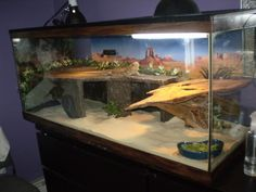 Bearded dragons aquarium set up pictures | bearded dragons teeth bearded dragons eating cute bearded dragons ...