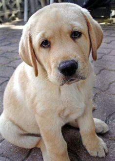 pet dog - http://ift.tt/29nLkGy