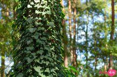 19 roślin, które będą rosły w zacienionych miejscach! - Twoje DIY Bonsai, Diy And Crafts, Pergola, Plants, Terrace, Gardening, Balcony, Bonsai Trees, Patio