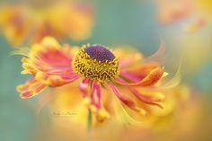 Autumn Twirl by Jacky Parker on 500px